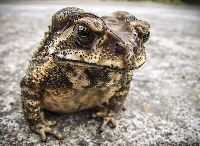 Poem: Unexpected Toad