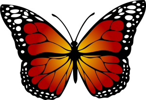 butterfly-red-gradiant