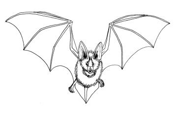 bat-1000