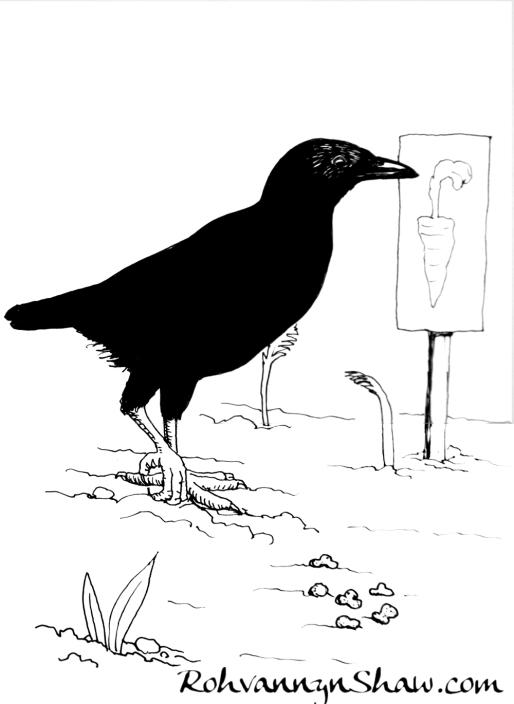 crow web.JPG