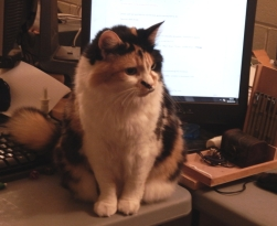 desk-cat-crop