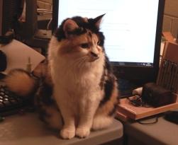 desk-cat-crop
