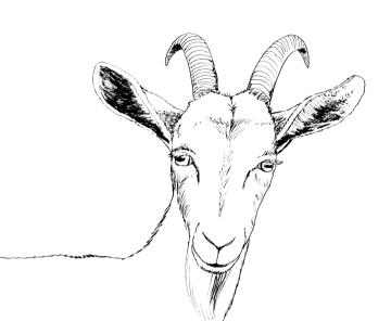 goat-1000