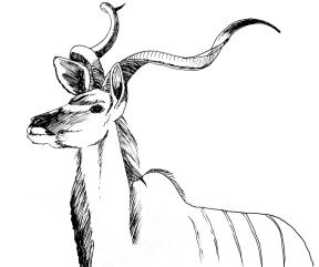 kudu-1000