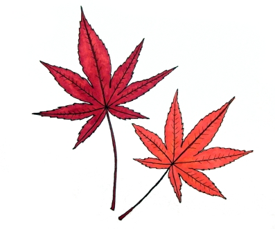 leaves-color-1000