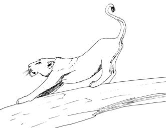 lioness-1000