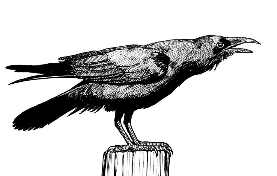 Inktober Day 27: Quoth The Raven–