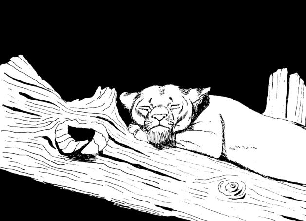 sleeping-lioness-postpro-1000