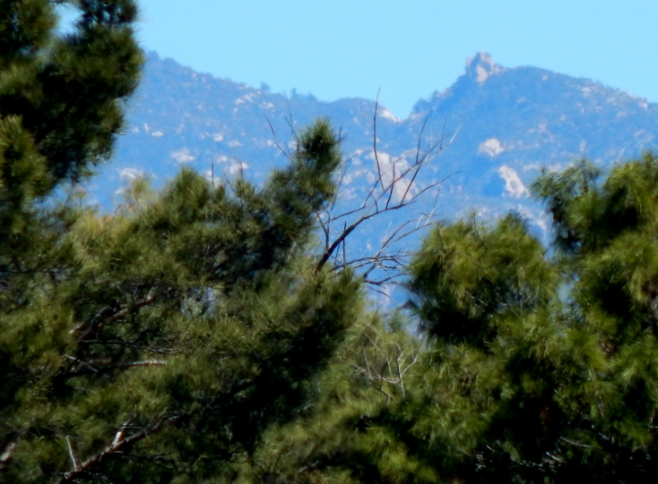 pines-and-mountains-1000