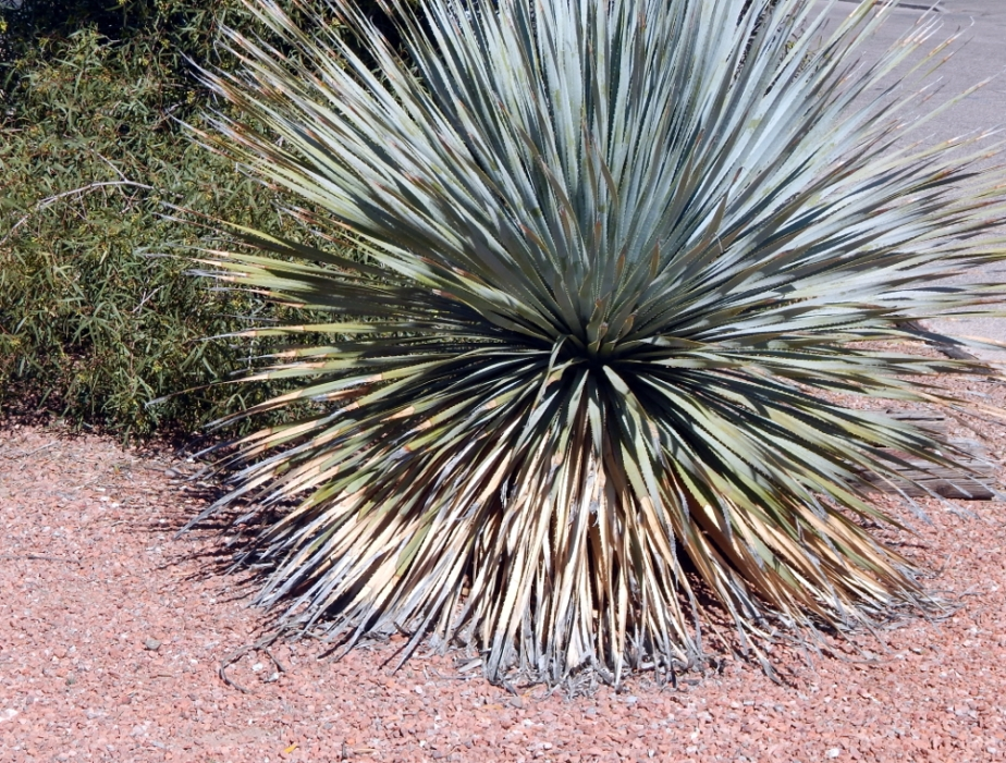 spiky-bush-1000