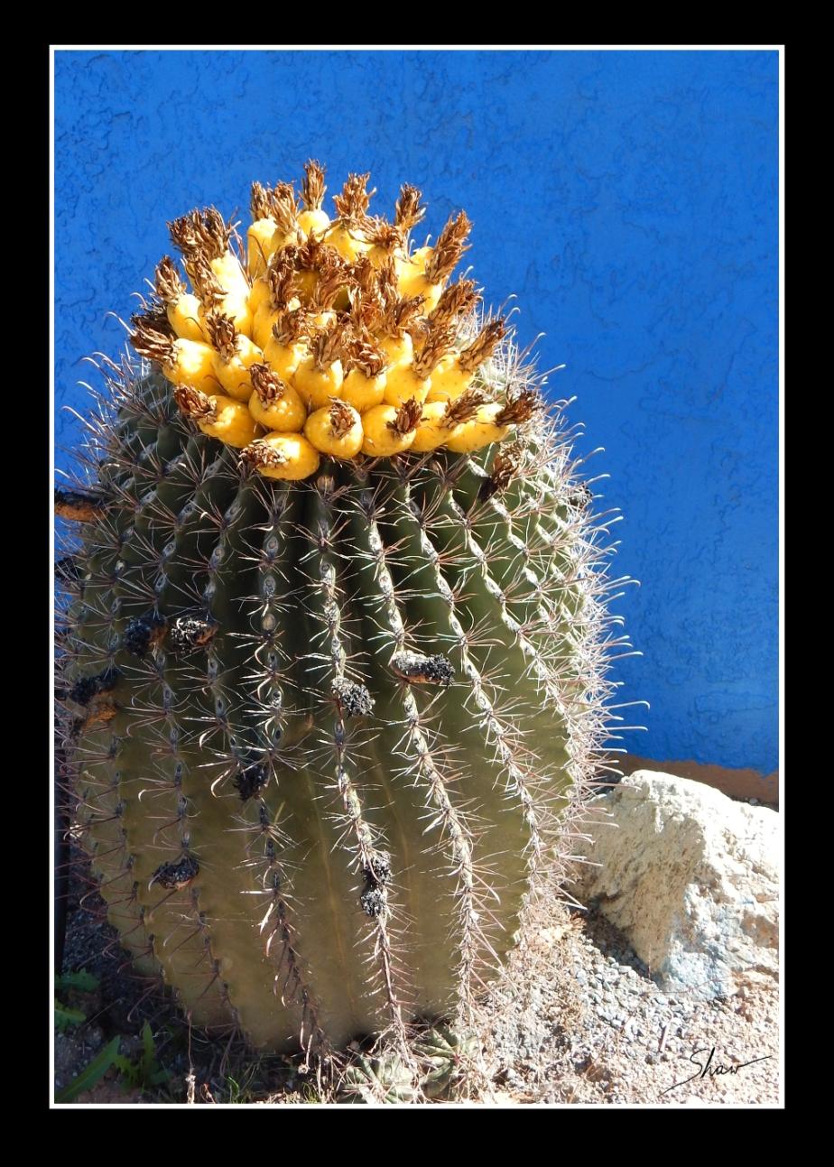 Cactus Art Print 1000