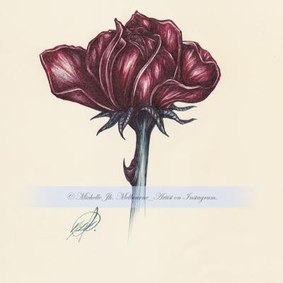 Still-Life-2015-Rose-02-400x400