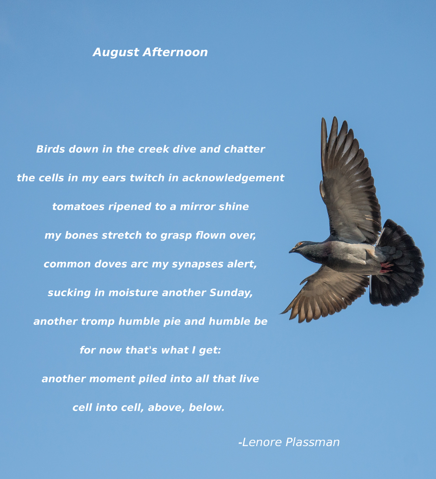 August Afternoon Poem 900.jpg