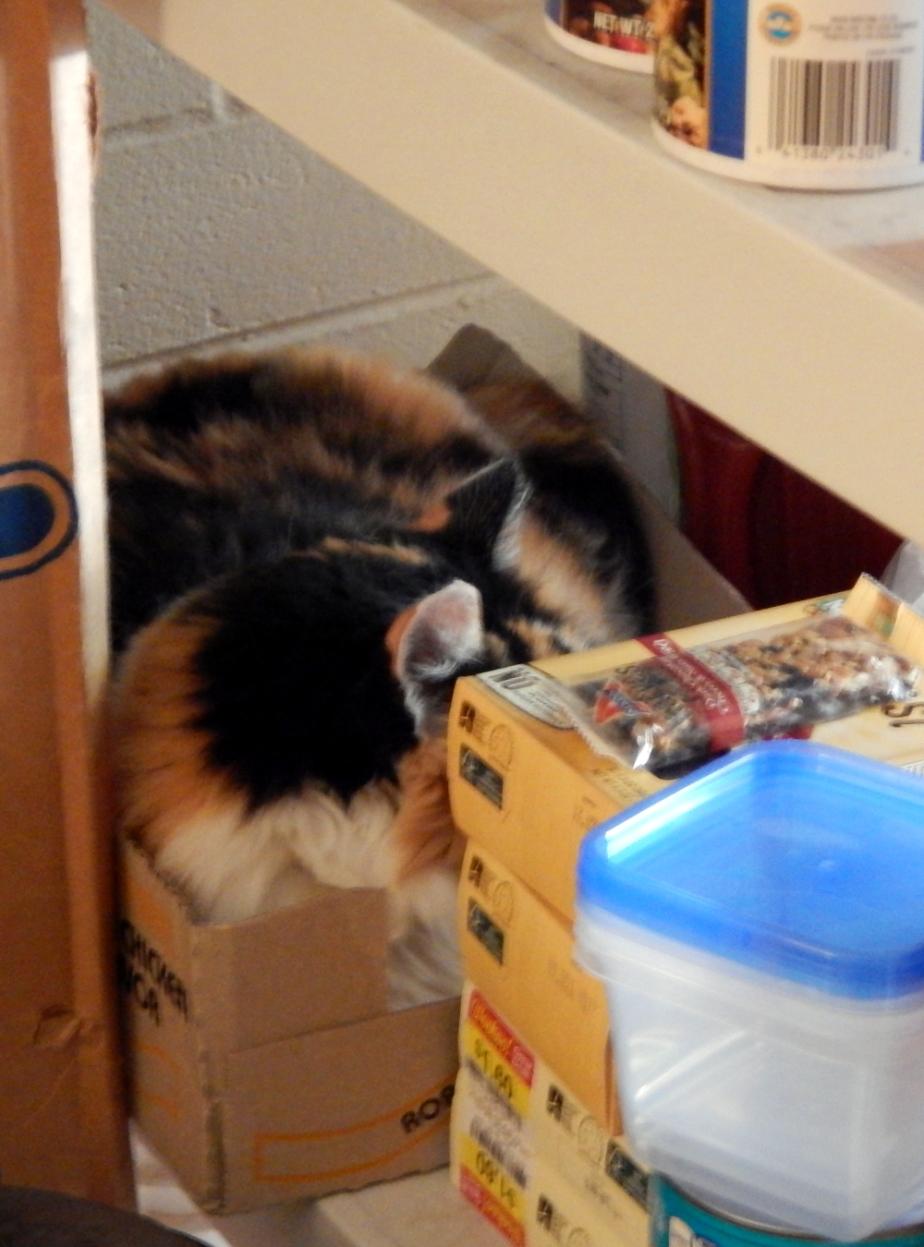 Cat Nests
