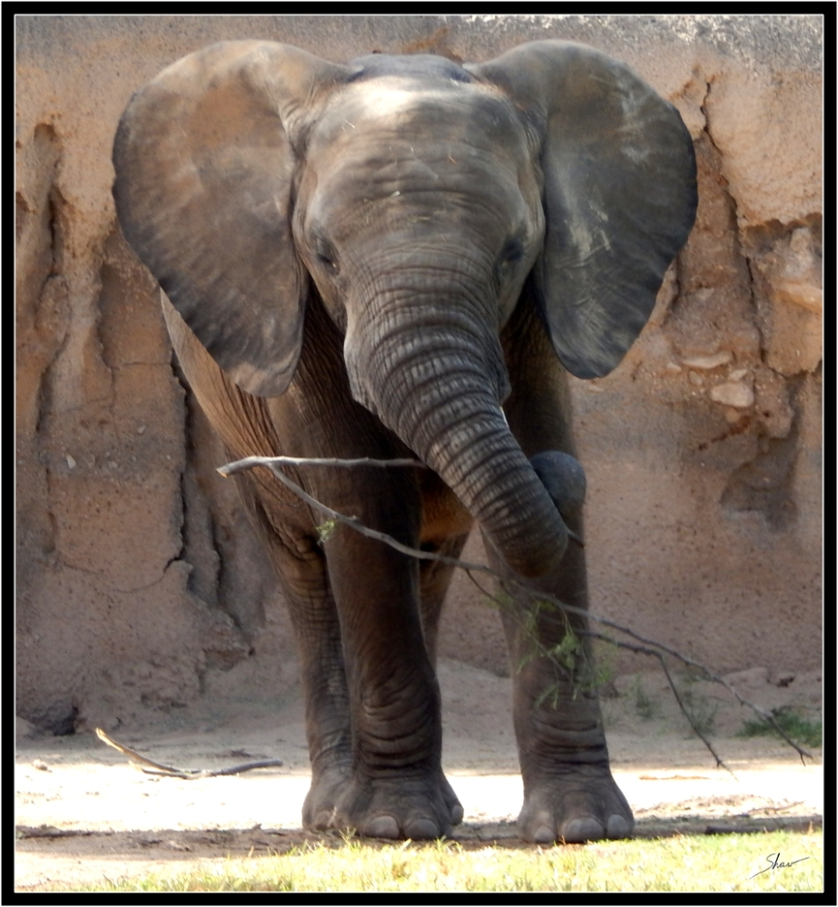 Elephant 950.JPG