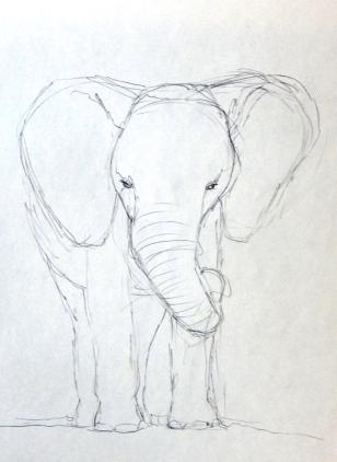 Elephant Sketch 700
