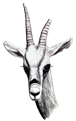 Gazelle 700