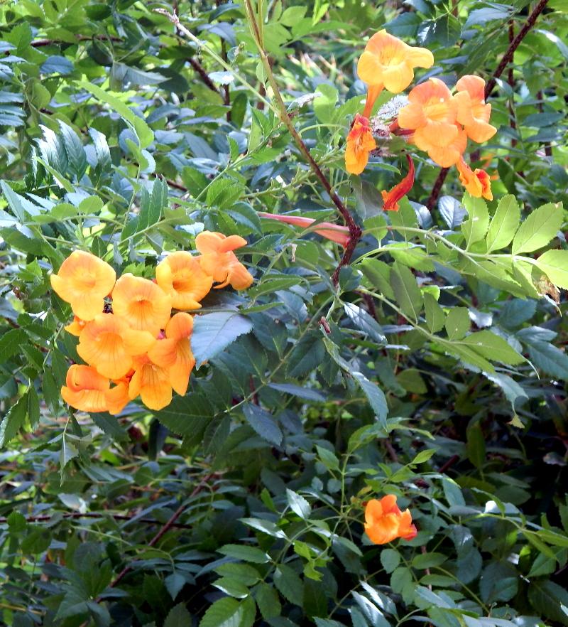 orange flowers 2 800