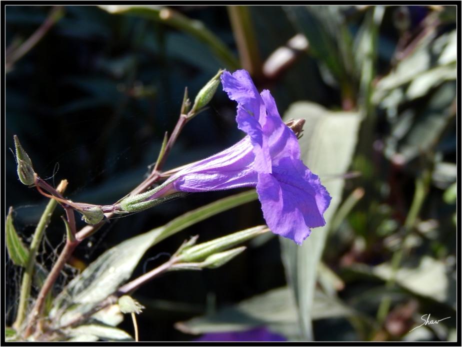 Purple Flower 1000