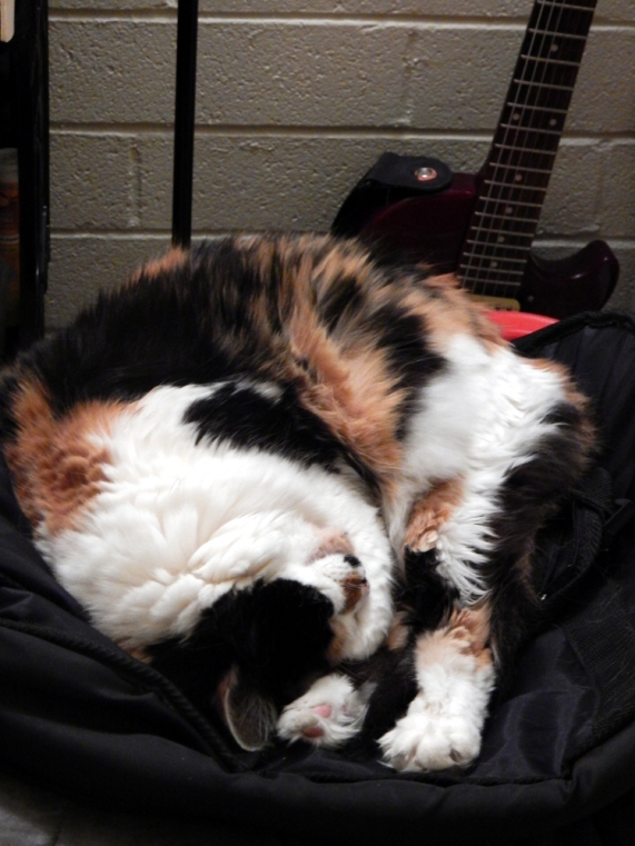 Nezumi upside down with guitar 1000