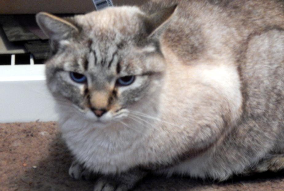 Feline Inscrutability