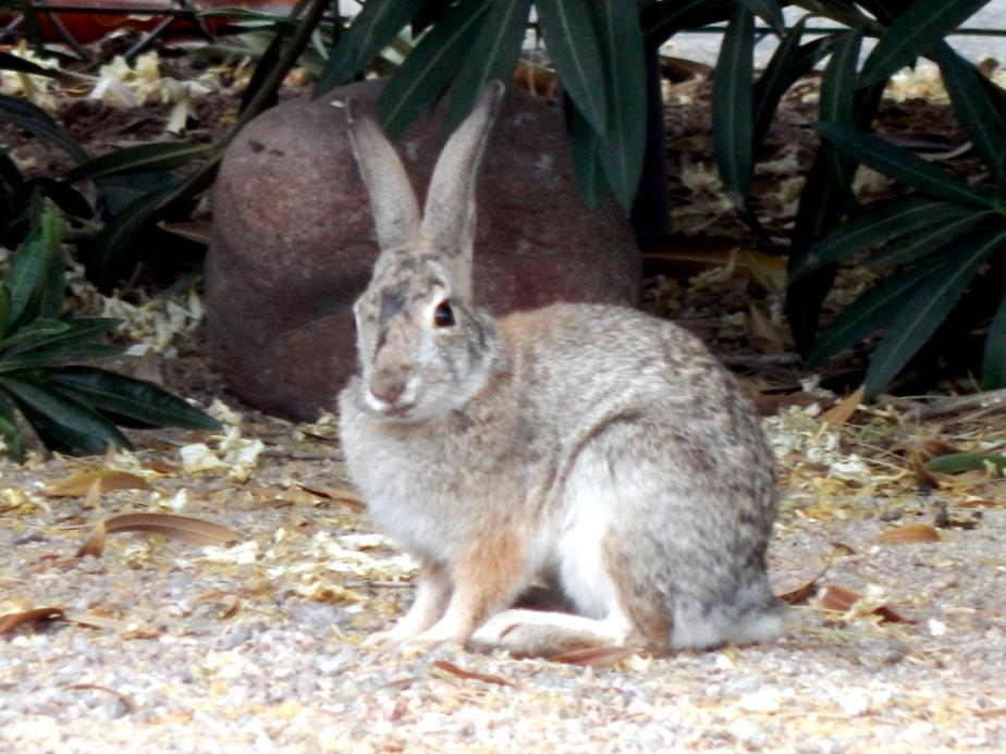 smirking bunny
