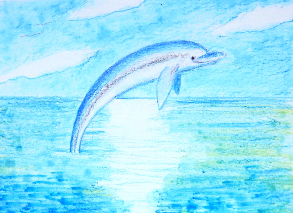 Card Dolphin