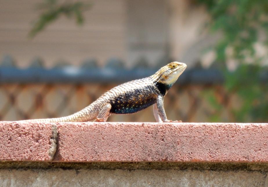 Lizard Lord 1400