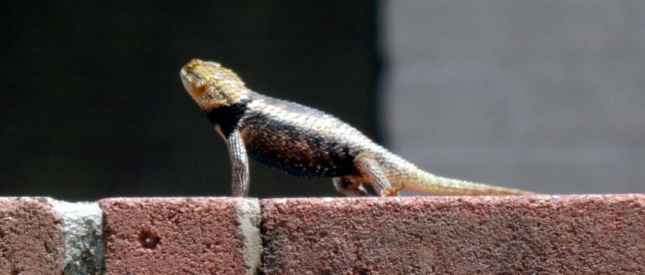 The Lizard Lord