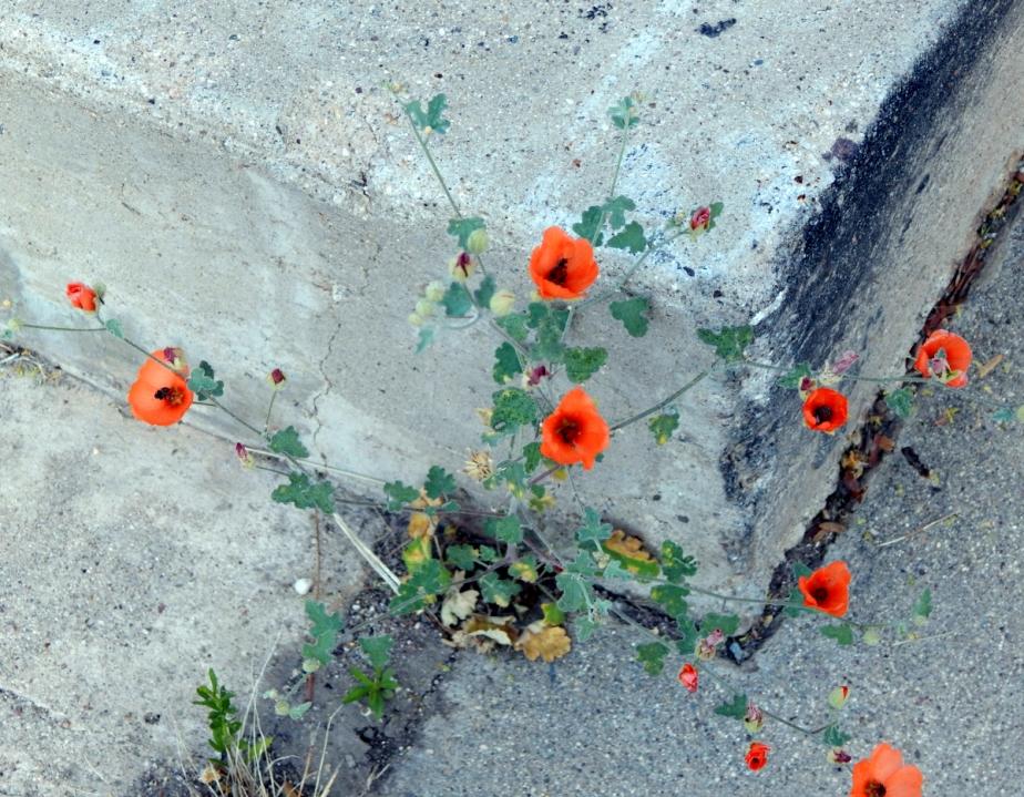 wildflowers 1200