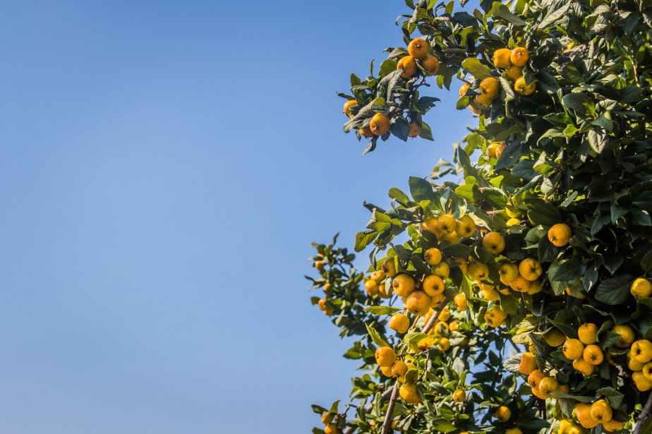 Roh Tries: Kumquats!