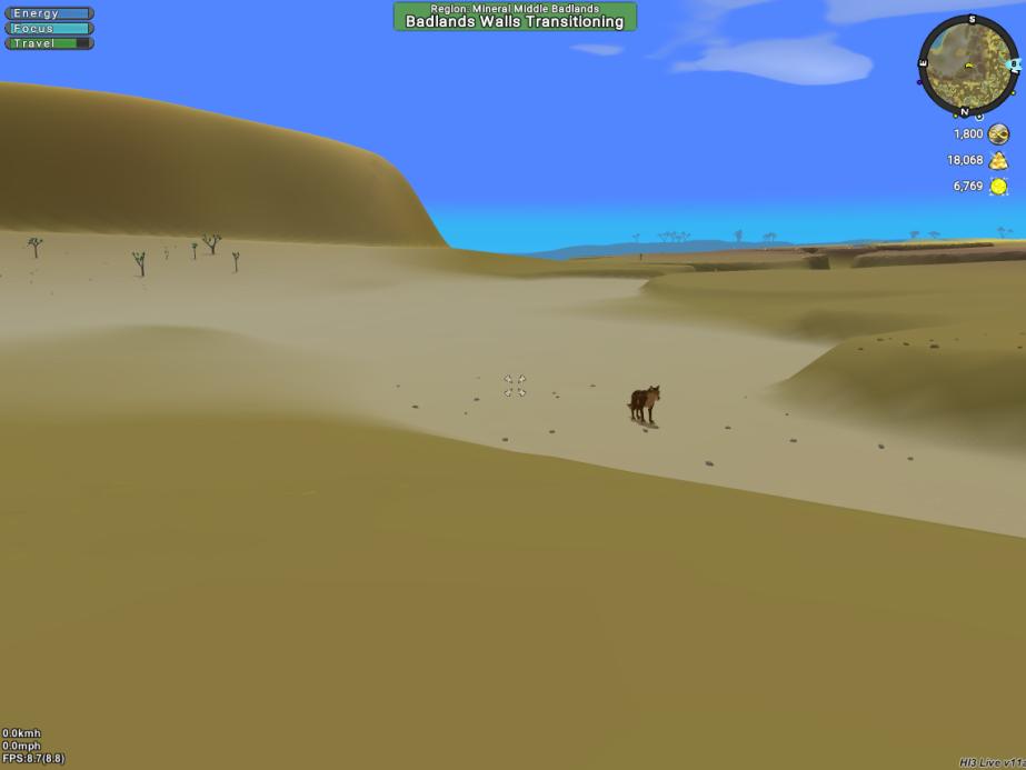 Coyote in Mesa