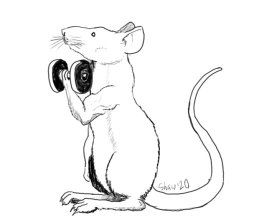 rat2rshaw