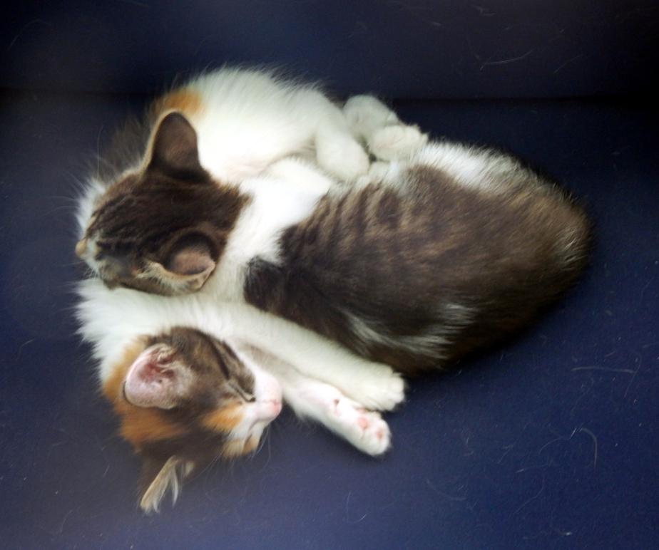 kittens sleeping june 7 2000