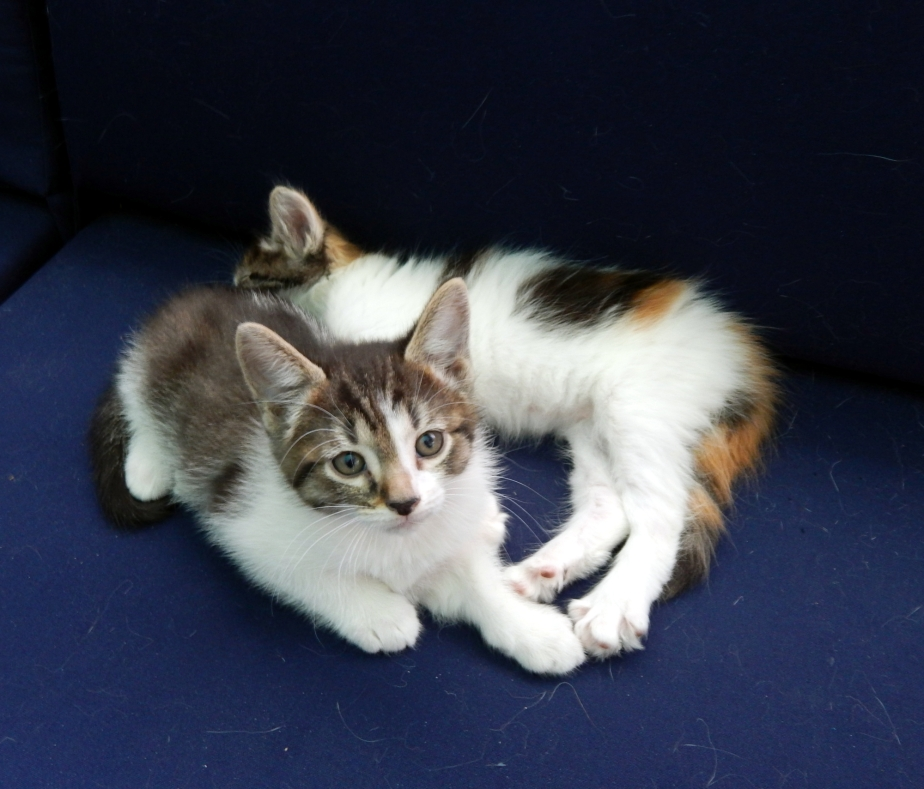 perfect kittens june 7 2000